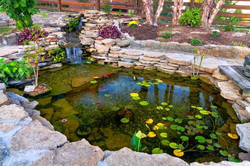Savoir choisir ses plantes aquatiques