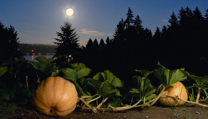 Jardiner en suivant le calendrier lunaire